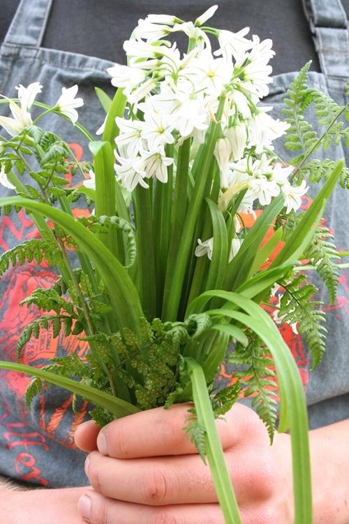 wild-garlic1